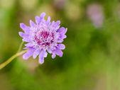 Delicate flower — Stockfoto