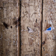 Royalty-Free Stock Photo: Old wood plank