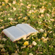 Royalty-Free Stock Photo: Open book on the grass