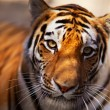 Tiger in the Novosibirsk zoo — Stock Photo #8932808