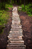 Winding forest wooden path walkway through wetlands — Stock Photo