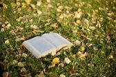 Otwórz książkę na trawie — Zdjęcie stockowe