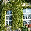 House with Virginia creeper — Stock Photo