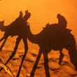 Stock Photo: Camel ride on the Thar desert in India
