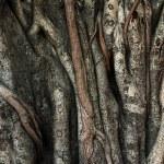Indian zen tree — Stock Photo #9895316