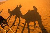 Camel shadow on the desert — Stock Photo