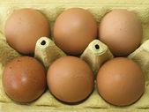 Six Eggs — Stock Photo