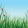 Three ladybugs walking on the green grass against the sky — Stock Vector