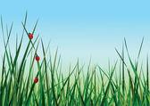 Три божьих коровок, ходить на зеленой траве против неба. — Cтоковый вектор