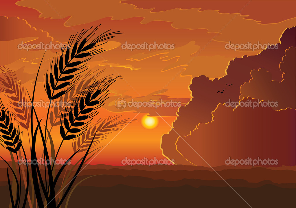 Vector sunset landscape with silhouette of rye, hill and red cloudy sky background — Stock Vector #8545493