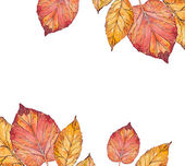 Group of autumn leaves — Stock Photo