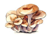 Oyster mushroom — Stock Photo