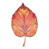 Red leaf, watercolor — Stock Photo
