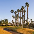 Golf Cart Path In Southern California — Stok fotoğraf