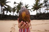 Coconut head — Stock Photo