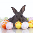 Easter Rabbits — Stock fotografie