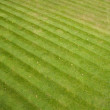 Grass stripes — 图库照片