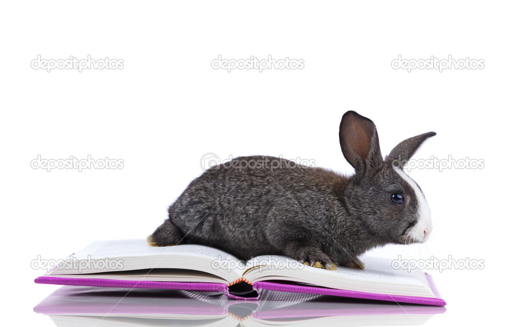 Rabbit inside a open book (isolated on white) — Stock Photo #8667166