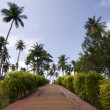 Stock Photo: The path to the tropical vacation