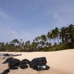 Summer paradise landscape — Stock Photo