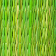 Bamboo detail — Stock Photo