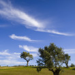 Lonely trees 3 — Stock Photo