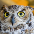Stock Photo: Eyes Of Owl
