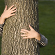 Huging a tree — Stock Photo
