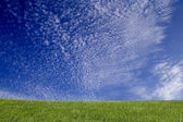 Grass and blue sky — Stockfoto
