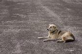 Lonely street dog — Stock Photo