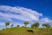 Lonely tree 11 — Stock Photo
