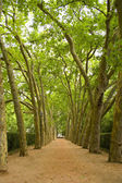 Path in the trees — Stock Photo