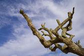 Mystic tree - CONTEST — Stock Photo