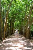 The Path of trees — Stock Photo