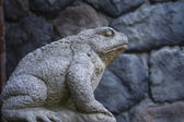 The rock frog — Stock Photo