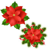 Poinsettia — Vector de stock