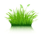 Eco Grass — Stock Vector