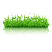 Zelené trávy s listovým — Stock vektor