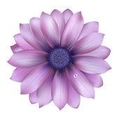 Lilac Flower With Water Drop — Stock Vector