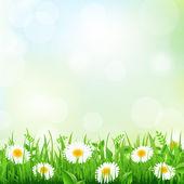 Hierba y daisy — Vector de stock