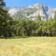 Trees against the mountains in Yosemite - Stockfoto