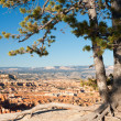 Two trees against the Bryce Amphitheater — Stock Photo