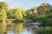 查看在纽约中央公园池塘 — 图库照片