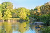 Rybník v new york central parku — Stock fotografie