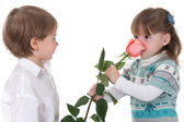 First rose from admirer — Stock Photo