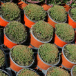 Plant nursery — Stock Photo #8095092