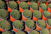 Plant nursery — Stock Photo