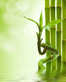 Green bamboo — Stock Photo