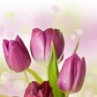 Spring feeling with pink tulip — Stock Photo