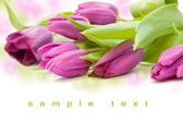 Beautiful tulip bouqet — Stock Photo